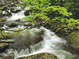 обои Great Smoky Mountains National Park, Tennessee фото