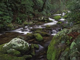 обои Mountain Stream, Tennessee фото
