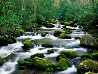 обои Roaring Fork River, Great Smoky Mountains, Tennessee фото