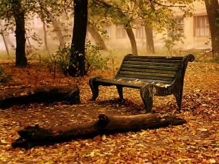 обои Одинокая лавочка в лесу фото