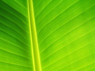 обои Чистота зелени фото