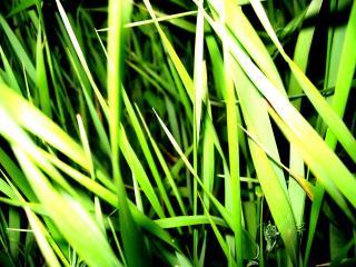 обои Трава фото