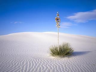 обои Одиночество в пустыне фото