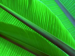 обои Экзотические листья фото