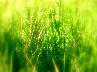 обои Залитая солнцем трава фото