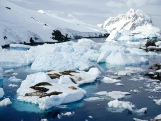 обои Льдины на воде фото