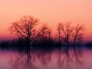 обои Деревья за озером, на закате фото