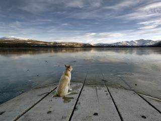 обои Одиночество - взгляд в будущее фото