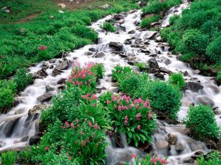 обои Ручей в Национальном Лесу Рузвельта, штат Колорадо фото