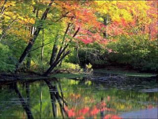 обои Осенние деревья фото