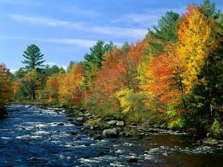 обои Осень, разноцветные деревья фото