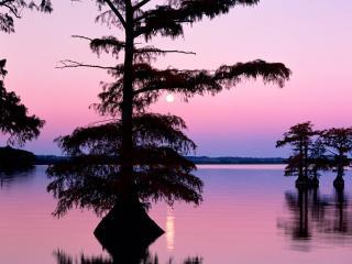 обои Bald Cyprus Trees, Reelfoot Lake, Tennessee фото