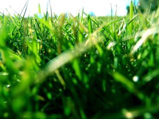 обои Травяной покров фото