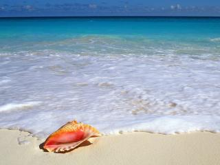 обои Beachside Treasure, Yucatan Peninsula, Mexico фото