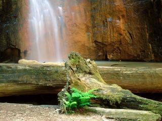 обои Berry Creek Falls, Big Basin , California фото