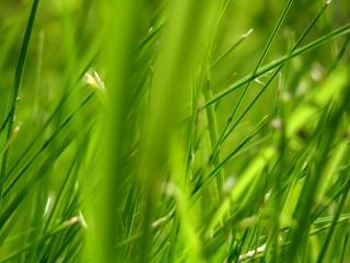 обои Зеленые мотивы фото