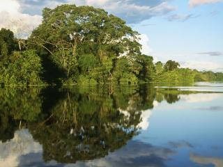 обои Амазонка фото