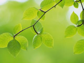 обои Ветка с листьями весенними фото
