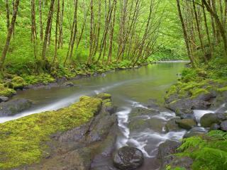 обои Nestucca River, Oregon фото