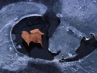 обои Листик во льду фото