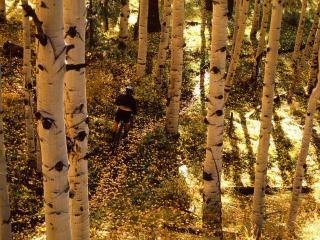 обои Aspen Ride, Telluride, Colorado фото