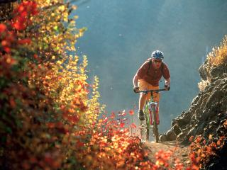 обои Flying Through Fall Colors, McKenzie Bridge,  Oregon фото