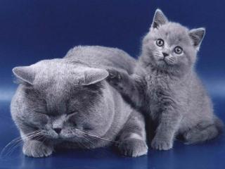 обои Кошка и котенок фото