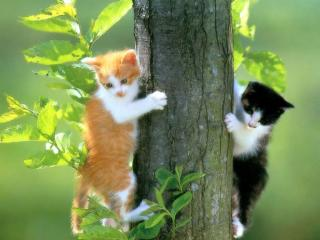 обои Котята напугались фото
