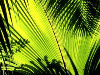 обои Тенистая зелень фото