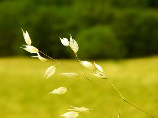 обои Тонкое растение фото