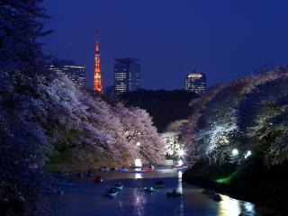 обои Tokyo фото