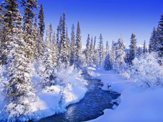 обои Banff in Winter, Alberta, Canada фото