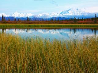 обои Calm Pond, Denali National Park, Alaska фото