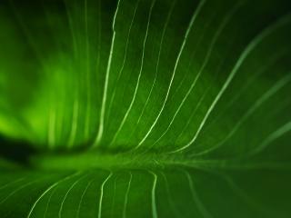 обои Зеленый фон фото