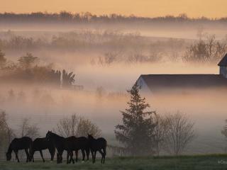 обои Конюшня в тумане фото