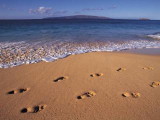 обои для рабочего стола: Следы на песке