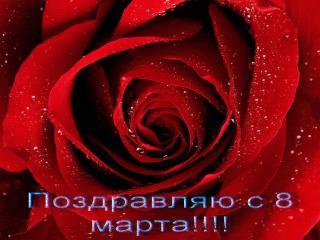 обои 8 марта-красная роза фото