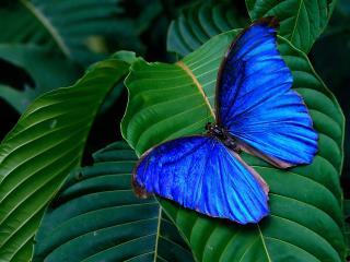 обои Тропическая бабочка фото