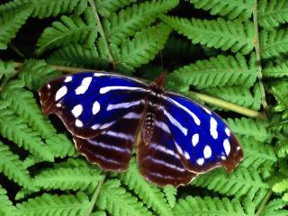 обои Timber butterfly фото