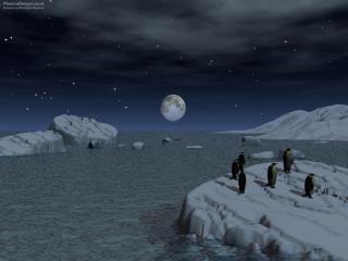 обои Стайка пингвинов на льдине фото