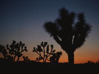 обои Много кактусов в пустыне фото