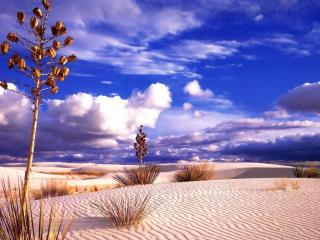 обои Кустарники в пустыни фото