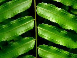обои Необычные листья фото