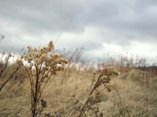 обои Ветренный день фото
