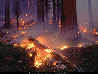 обои Пожар в лесу фото