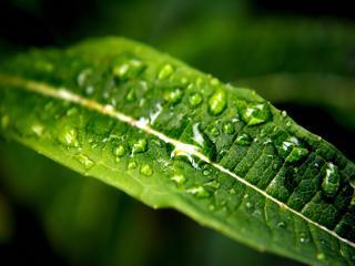 обои Дождь прошел фото