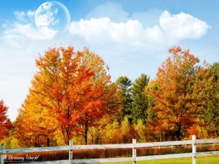 обои Осенний лес и заборчик фото