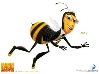 обои Пчёл Адам фото