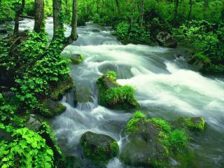 обои Весенний ручей, в ярком зеленом лесу фото