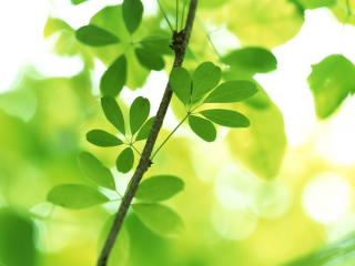 обои Маленькие листья фото